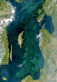 Aerial photo of mint green algal bloom in a darker mass of water with a sinuous perimeter surrounded by light green areas