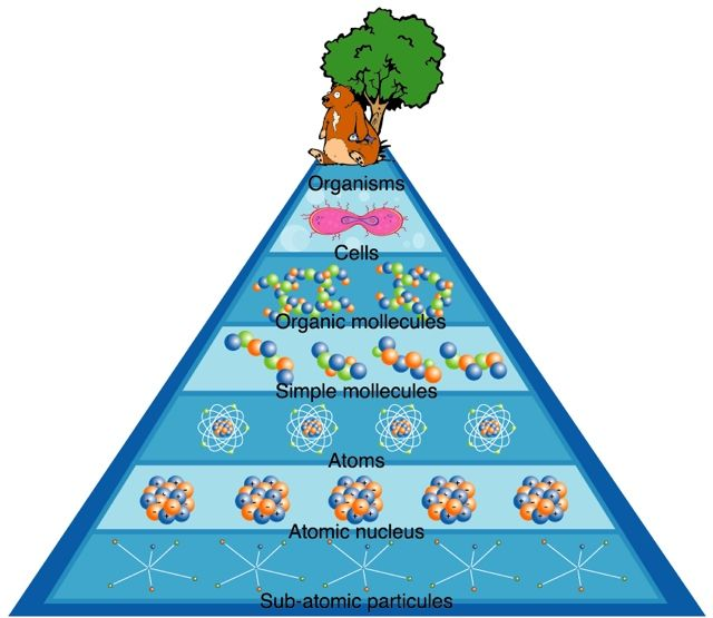Drawing of a seven-tiered (organisms, cells, organic mollecules, simple mollecules, atoms, atomic nucleus, sub-atomic particules) blue pyramid with a beaver in front of a tree at the top