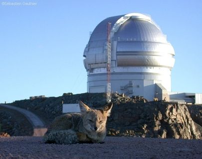 Photo of a grey fox lying in the sand in front of a silver-coloured observatory located on a hill with the blue sky as a backdrop